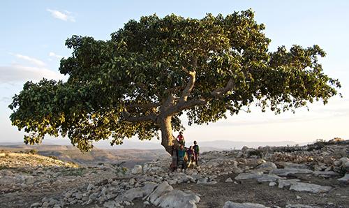 エチオツリーズ